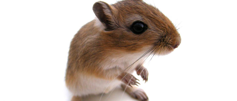 Pourquoi la petite souris ne passe pas quand on perd un sein ?